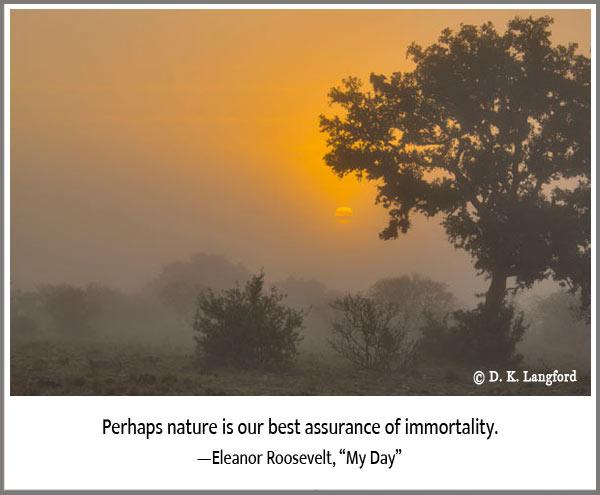 Hillingdon Fog sunrise in the fog