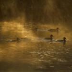 053 Sunrise on the Pond Hillingdon Fog Book