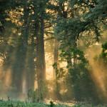 055 Cypress Sunrise Hillingdon Fog Book